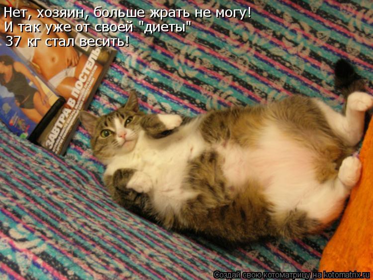 """Котоматрица: Нет, хозяин, больше жрать не могу! И так уже от своей """"диеты"""" 37 кг стал весить!"""