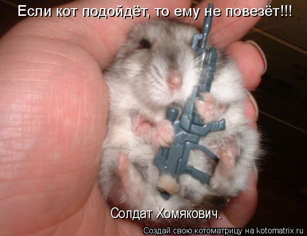 Котоматрица: Если кот подойдёт, то ему не повезёт!!! Солдат Хомякович.