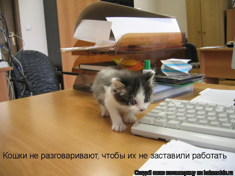 Котоматрица: Кошки не разговаривают, чтобы их не заставили работать
