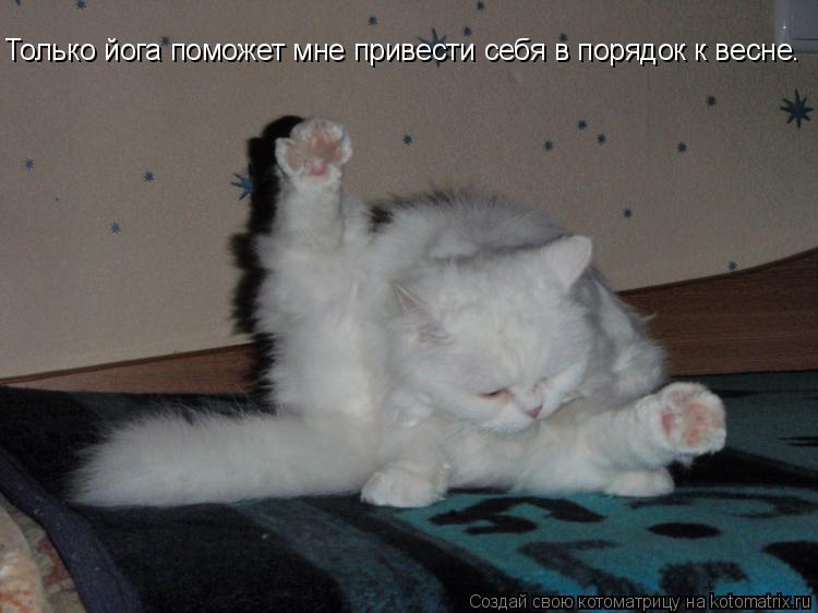 Котоматрица: Только йога поможет мне привести себя в порядок к весне.