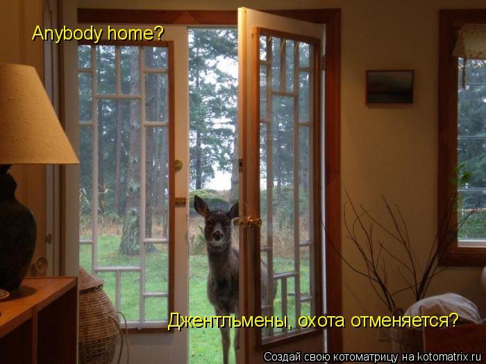 Котоматрица: Anybody home?  Джентльмены, охота отменяется?