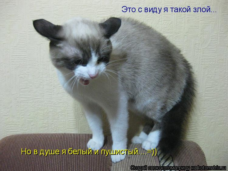Котоматрица: Это с виду я такой злой... Это с виду я такой злой... Но в душе я белый и пушистый....=))