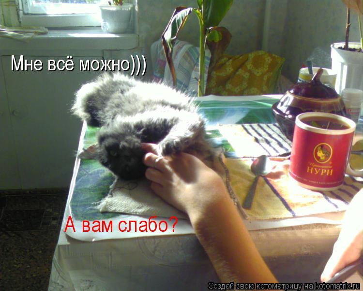 Котоматрица: Мне всё можно))) А вам слабо?