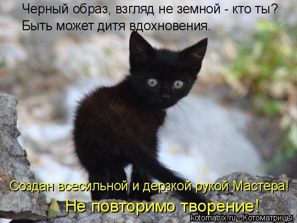 Котоматрица: Черный образ, взгляд не земной - кто ты? Быть может дитя вдохновения. Создан всесильной и дерзкой рукой Мастера! Не повторимо творение!