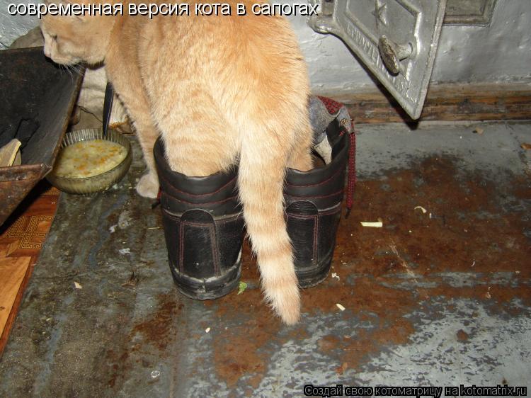 Котоматрица: современная версия кота в сапогах