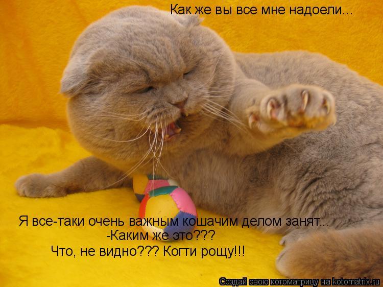 Котоматрица: Как же вы все мне надоели... Я все-таки очень важным кошачим делом занят... -Каким же это??? Что, не видно??? Когти рощу!!!