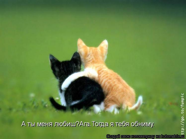 Котоматрица: А ты меня любиш?Ага.Тогда я тебя обниму.