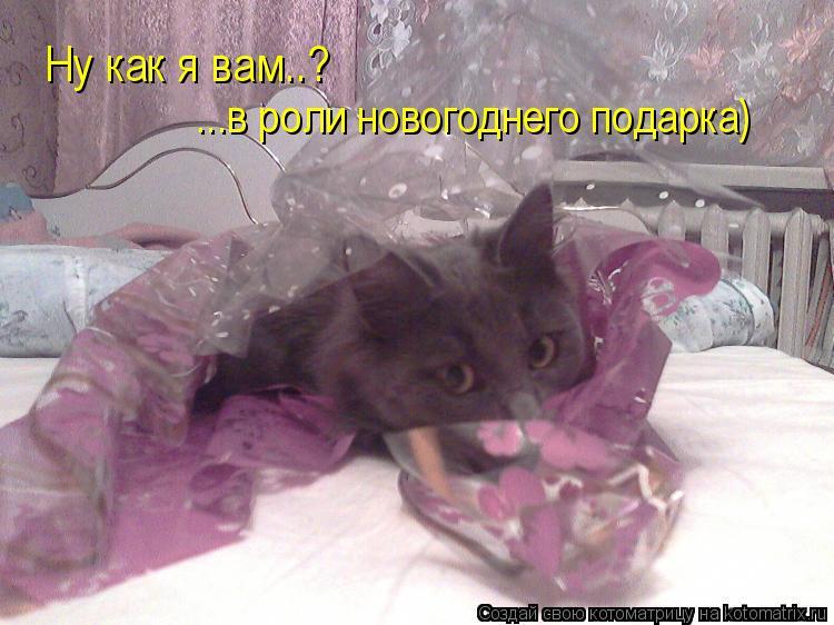 Котоматрица: Ну как я вам..? ...в роли новогоднего подарка)