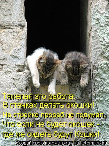 Котоматрица: Тяжелая это работа: В стенках делать окошки! На стройке прораб не подумал, Что если не будет окошек - где же сидеть будут Кошки!