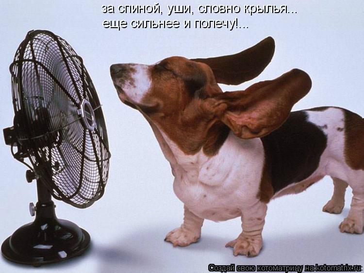 Котоматрица: за спиной, уши, словно крылья... еще сильнее и полечу!...