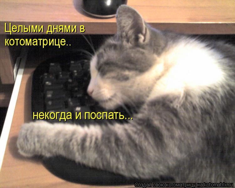 Котоматрица: Целыми днями в котоматрице.. некогда и поспать...