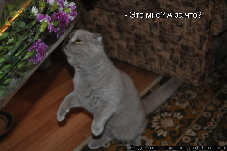 Котоматрица: - Это мне? А за что?