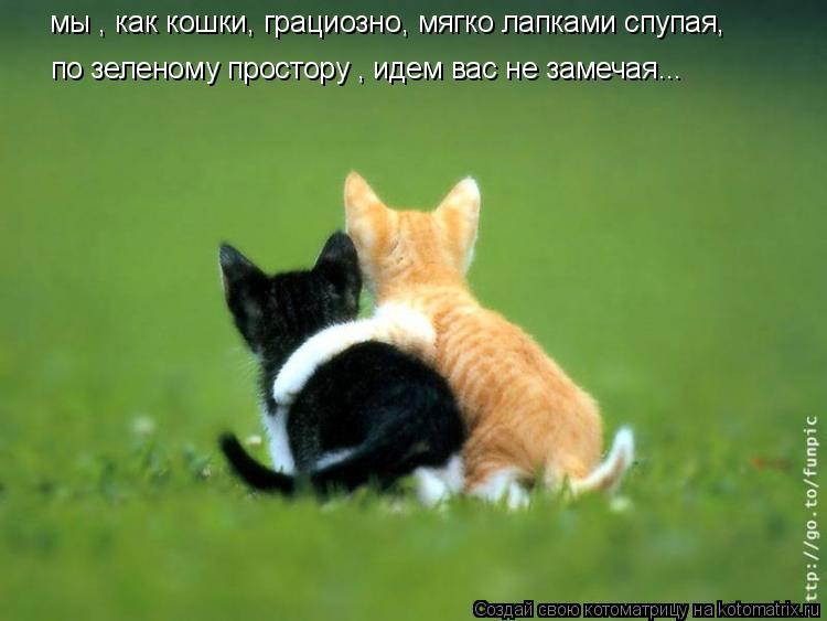 Котоматрица: мы , как кошки, грациозно, мягко лапками спупая, по зеленому простору , идем вас не замечая...