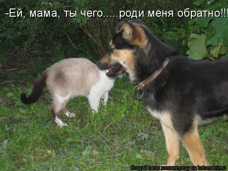 Котоматрица: -Ей, мама, ты чего.....роди меня обратно!!!
