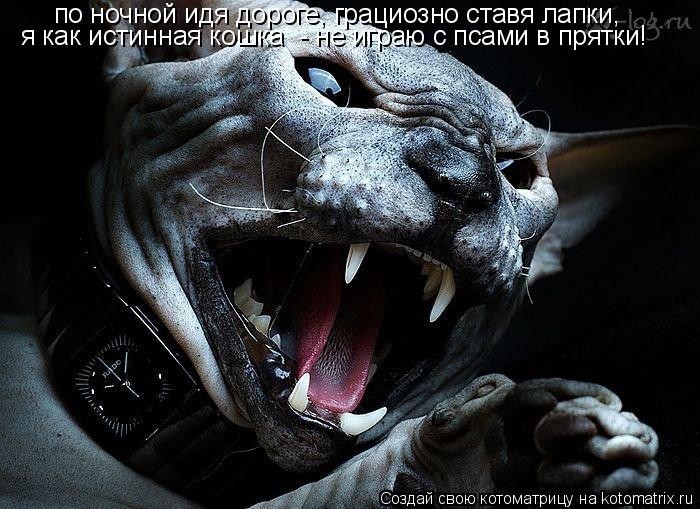 Котоматрица: по ночной идя дороге, грациозно ставя лапки, я как истинная кошка  - не играю с псами в прятки!