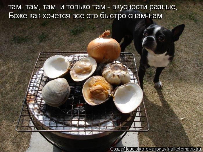 Котоматрица: там, там, там  и только там - вкусности разные, Боже как хочется все это быстро снам-нам