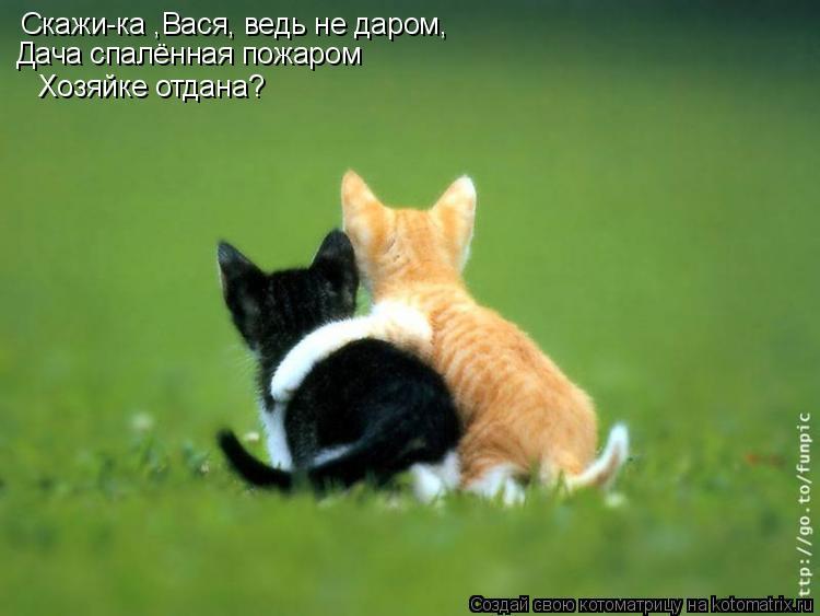 Котоматрица: Cкажи-ка ,Вася, ведь не даром, Дача спалённая пожаром Хозяйке отдана?