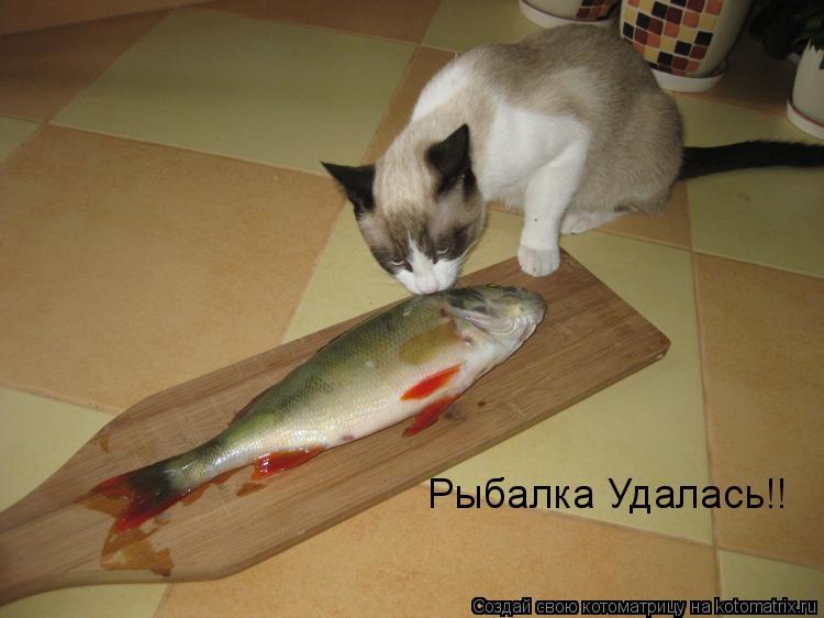 Котоматрица: Рыбалка Удалась!!