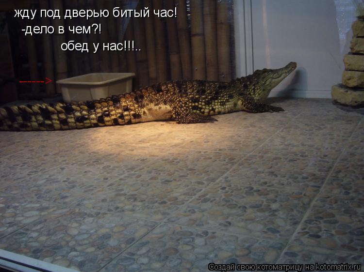 Котоматрица: жду под дверью битый час! -дело в чем?! обед у нас!!!.. ------>