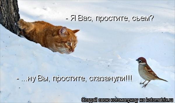 Котоматрица: - Я Вас, простите, сьем? - ...ну Вы, простите, сказанули!!!