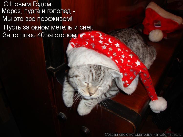 Котоматрица: С Новым Годом! Мороз, пурга и гололед -    Мы это все переживем!    Пусть за окном метель и снег, За то плюс 40 за столом!