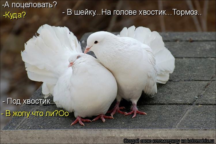 поцелуй в жопу фото