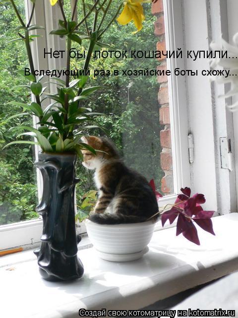 Котоматрица: Нет бы, лоток кошачий купили... В следующий раз в хозяйские боты схожу...