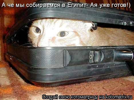 Котоматрица: А че мы собираемся в Египит- Ая уже готов!)