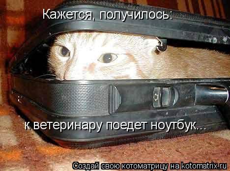Котоматрица: Кажется, получилось: к ветеринару поедет ноутбук...