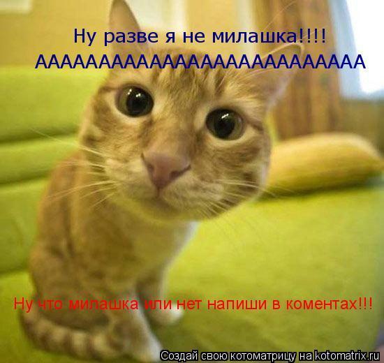 Котоматрица: Ну разве я не милашка!!!! АААААААААААААААААААААААААА Ну что милашка или нет напиши в коментах!!!