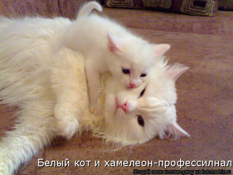 Котоматрица: Белый кот и хамелеон-профессилнал