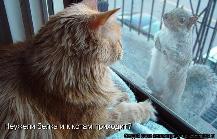Котоматрица: Неужели белка и к котам приходит?