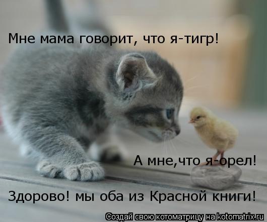 Котоматрица: Мне мама говорит, что я-тигр! А мне,что я-орел! Здорово! мы оба из Красной книги!