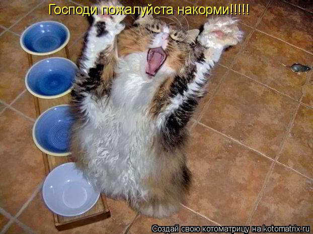 Котоматрица: Господи пожалуйста накорми!!!!!
