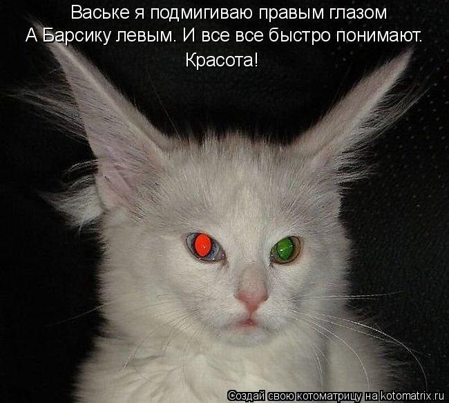 Котоматрица: Ваське я подмигиваю правым глазом А Барсику левым. И все все быстро понимают. Красота!