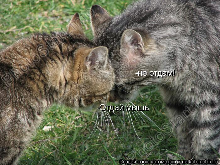 Котоматрица: -Отдай мышь -не отдам!