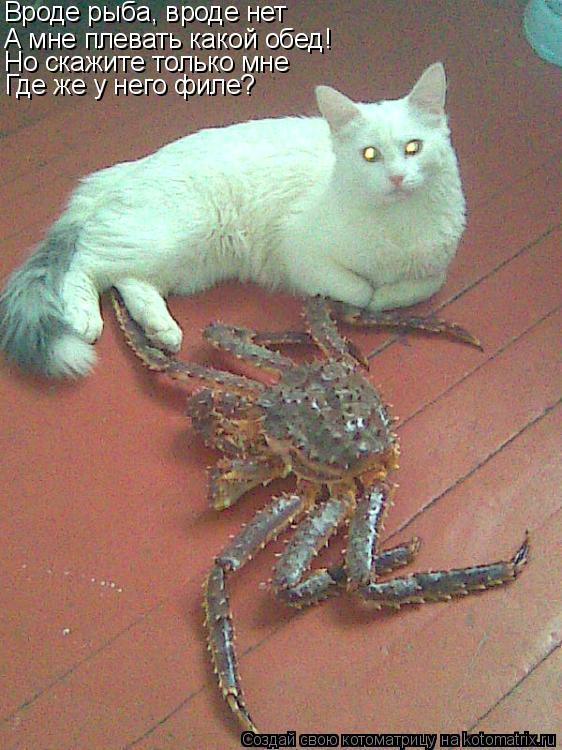 Котоматрица: Вроде рыба, вроде нет А мне плевать какой обед! Но скажите только мне Где же у него филе?