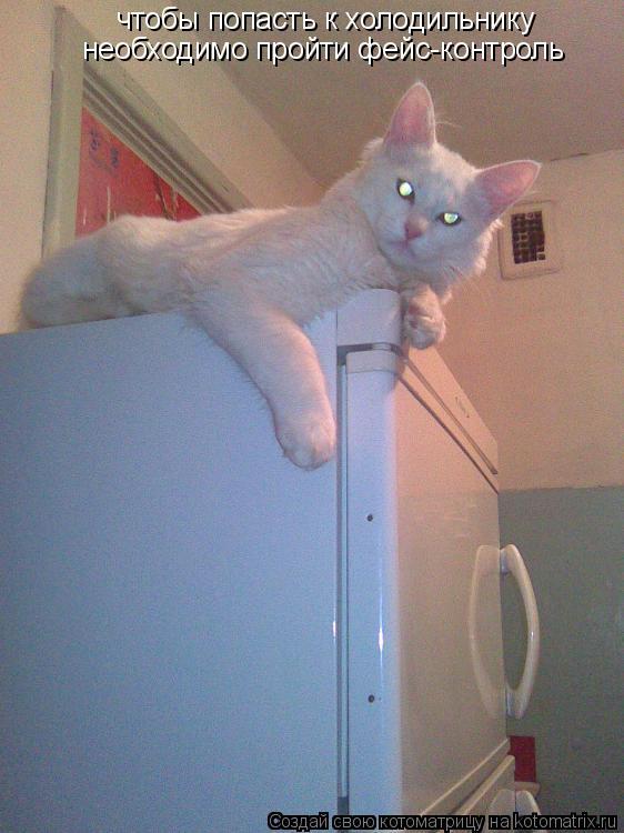 Котоматрица: чтобы попасть к холодильнику необходимо пройти фейс-контроль