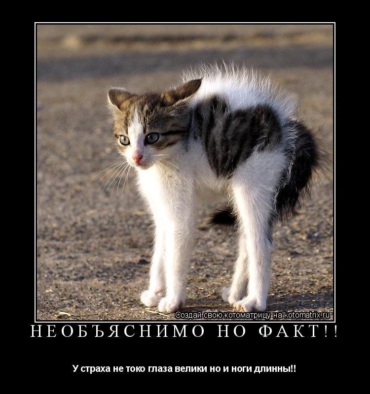 Котоматрица: необъяснимо но факт!! У страха не токо глаза велики но и ноги длинны!!
