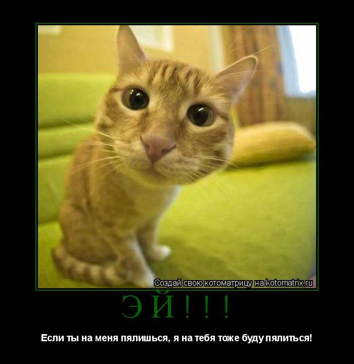 Котоматрица: ЭЙ!!! Если ты на меня пялишься, я на тебя тоже буду пялиться!