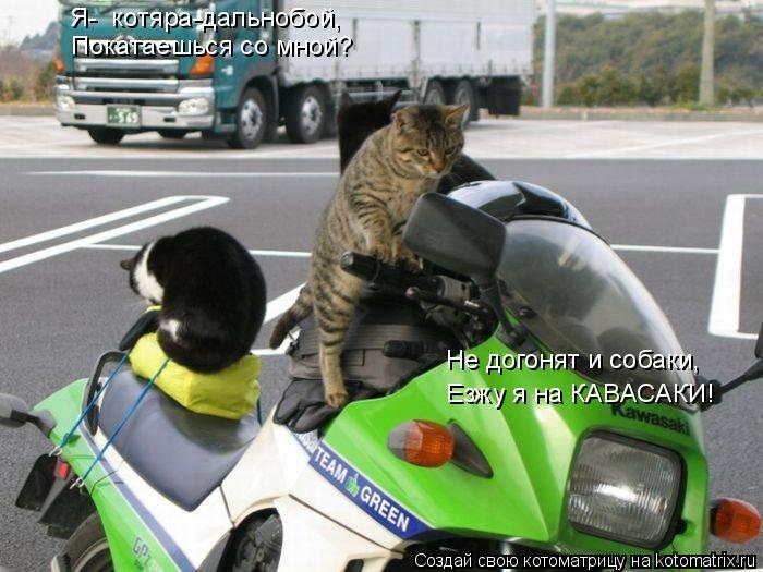 Котоматрица: Я-  котяра-дальнобой, Покатаешься со мной? Езжу я на КАВАСАКИ! Не догонят и собаки,