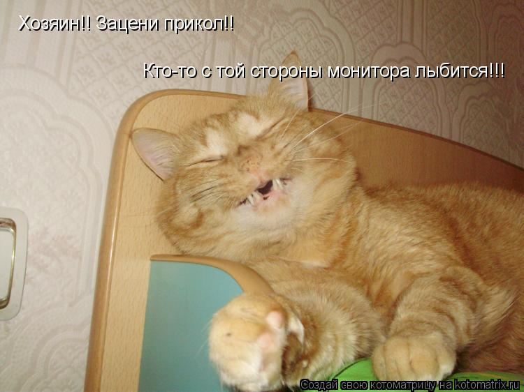 Котоматрица: Хозяин!! Зацени прикол!! Кто-то с той стороны монитора лыбится!!!