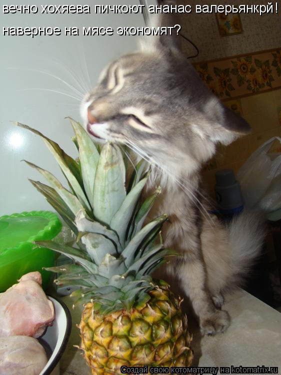 Котоматрица: вечно хохяева пичкоют ананас валерьянкрй наверное на мясе экономят? !