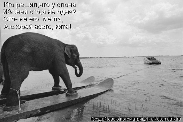 Котоматрица: Кто решил,что у слона Жизней сто,а не одна? Это- не его  мечта, А,скорей всего, кита!,