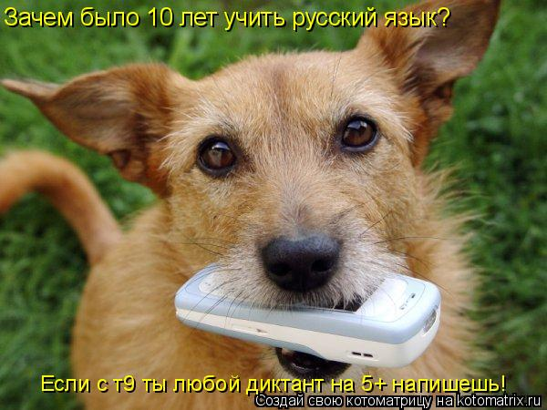 Котоматрица: Зачем было 10 лет учить русский язык? Если с т9 ты любой диктант на 5+ напишешь!
