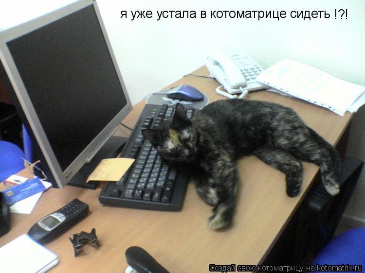 Котоматрица: я уже устала в котоматрице сидеть !?!