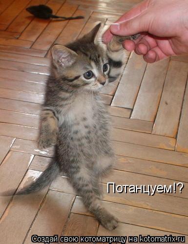 Котоматрица: Потанцуем!?
