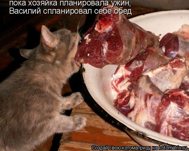 Котоматрица: пока хозяйка планировала ужин, Василий спланировал себе обед