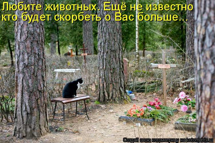 Котоматрица: Любите животных. Ещё не известно  кто будет скорбеть о Вас больше...