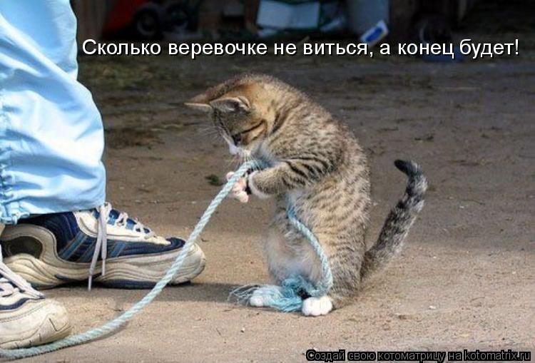 Котоматрица: Сколько веревочке не виться, а конец будет!